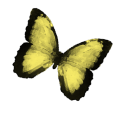 cropped-yellowbutterfly1.png